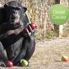$5 Donation to Help Feed Rescued Chimps