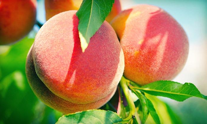 Lee Farms - Lee Farms: $10 for 20 Corn & Peach Festival Activity Tickets at Lee Farms ($20 Value)