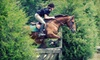Equestrian Arts Institute - Stags Trail: Two or Four One-Hour Horseback-Riding Lessons at Equestrian Arts Institute in Mebane (Up to 61% Off)