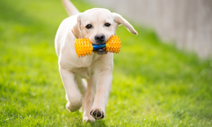 Pet's Delight - South Pasadena: Pet Accessories and Supplies at Pet's Delight (40% Off)