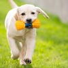 Up to 48% Off Dog Walking from Who Let The Dogz Out LLC