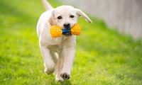 Up to £20 Towards Dog Treats and Toys at Happy Paws Torbay