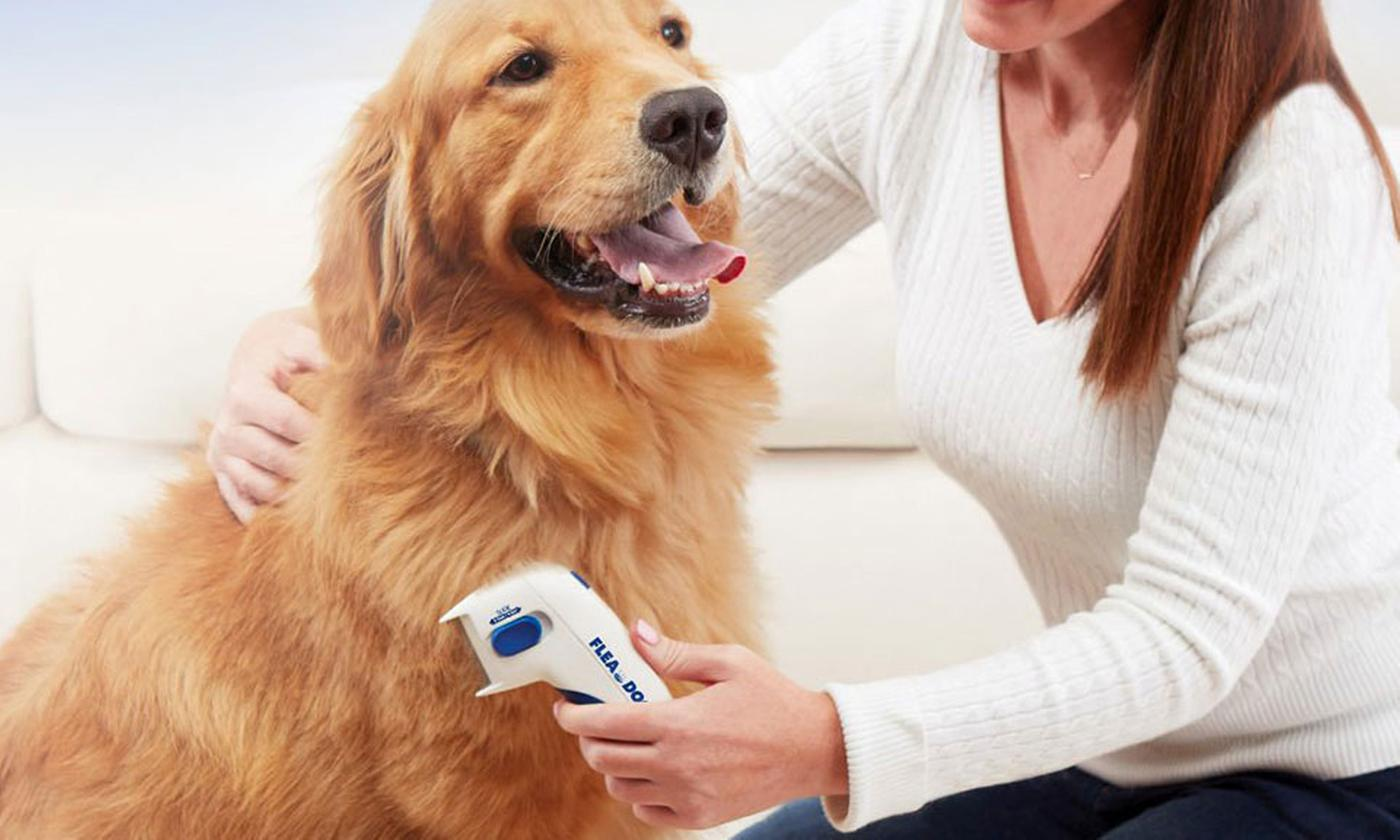 One or Two Electric Flea Combs for Pets