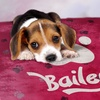 Up to 93% Off Custom Dog Blankets from Printerpix USA