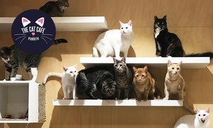 The Cat Cafe Purrth: Cat Cafe Experience with Food and Mug for 1 ($25) or Private Experience ($129) at The Cat Cafe Purrth (Up to $200 Value)