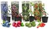4er-Set Obstpflanzen: Goji-Beere, Heidelbeere, Cranberryund Mini-Kiwi