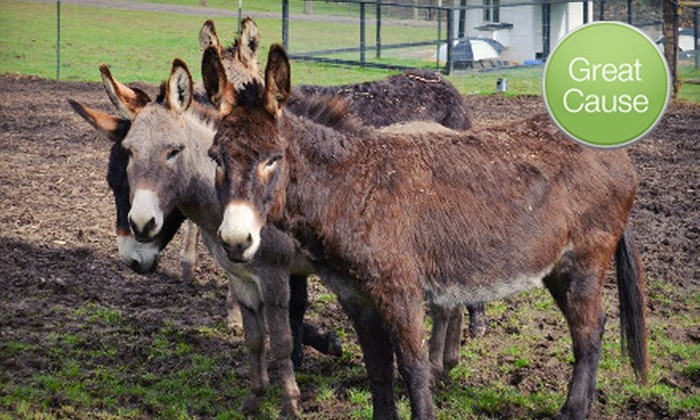 Peaceful Valley Donkey Rescue: $10 Donation to Help Feed Rescued Donkeys
