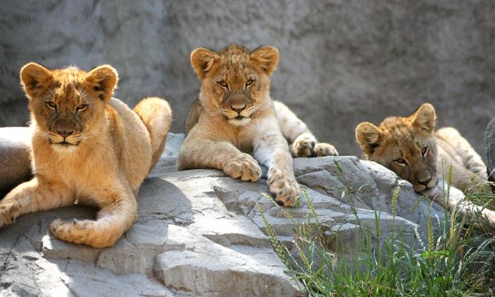Sacramento Zoo - Southwestern Sacramento: $25 for Weekday Fun for Four with Rides at Sacramento Zoo (Up to $63 Value)