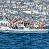 Up to 73% Off Whale Watching & Binocular Rental