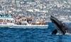 Up to 69% Off Off Whale Watching & Binocular Rental