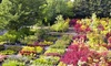 Greer Gardens - Cal Young: One Corylopsis Shrub or $15 for $30 Worth of Trees, Plants, and Flowers at Greer Gardens (Up to 50% Off)