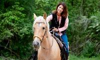 3 cours dessai à poney ou à cheval pour enfants ou adultes dès 19,90 € à lEcurie Christophe Juncker Equigeiss Fun Jump