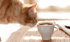 Up to 58% Off Two-Hour Admission Package at Kzoo Cat Cafe at Kzoo Cat Cafe, plus 6.0% Cash Back from Ebates.