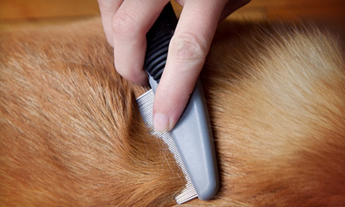 Urban Dogg - East Dallas: Grooming for a Small, Medium, or Large Dog at Urban Dogg (Up to 51% Off)
