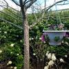 """Plantopia 12"""" Hanging Basket Planter"""