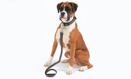 Dog Leash and Adjustable Collar Set for £4.99