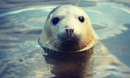 Zeehondensafari van 3 uur op de Oosterschelde voor 18 personen met De Eendracht in Zeeland
