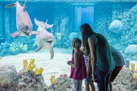Up to 33% Off Admission to SeaWorld San Antonio