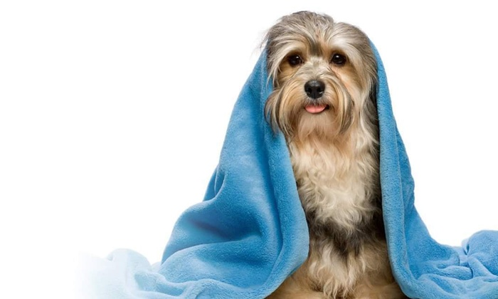 Bristol Veterinary Hospital - Streetsville: Up to 51% Off Pet Grooming at Bristol Veterinary Hospital