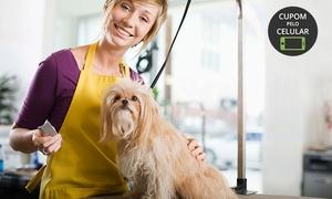 Boutique de Bicho: Boutique de Bicho – Bom Fim: banho (opção com tosa higiênica) para cachorros de porte pequeno, médio ou grande