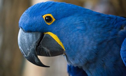 One Adult or Child Admission to Bird Kingdom (Up to 25% Off)