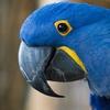 Admissions to Bird Kingdom