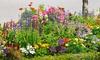 Pre-Order: Pre-Seeded Flower Mat w/ Soil & Plant Food (1-/2-/3-Pk)