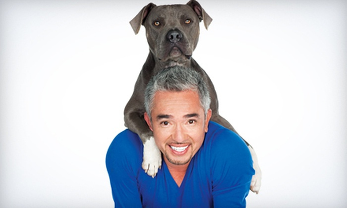 Cesar Millan Live - South Okanagan Events Centre: Cesar Millan Live at the South Okanagan Events Centre on November 8 at 7:30 p.m. (Up to 44% Off)