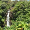 Up to 52% Off Rainforest Hiking Tour