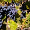 Up to 51% Off Outing at Newport Vineyards
