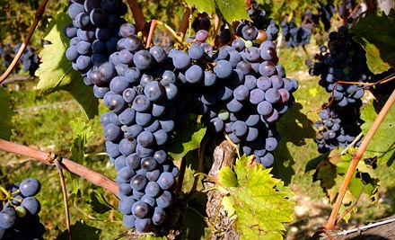 Vineyard Outing for 2 - Newport Vineyards in Middletown