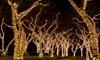 LED Solar-Powered Fairy Lights