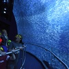 National Geographic Encounter: Ocean Odyssey –Up to 20% Off