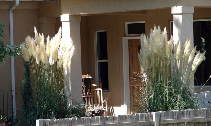 3 ou 6 herbes de la pampa plumes groupon. Black Bedroom Furniture Sets. Home Design Ideas