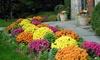 Florida Lawn & Garden LLC - Orlando: $46 Off $99 Worth of Landscaping