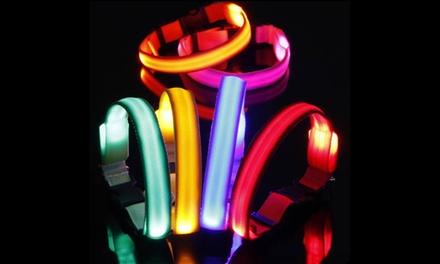 Bunty LED Dog Collar