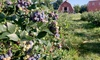 Up to 45% Off Blueberry Picking at Farmer Dave's