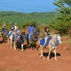 Up to 45% Off Horseback Riding Tour
