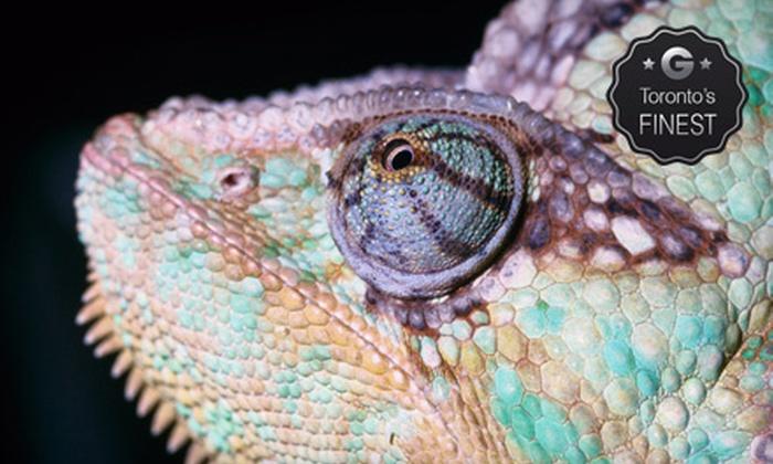 Reptilia - Reptilia: $7 for a Reptile-Zoo Visit at Reptilia (Up to $15 Value)