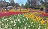 Sydney to Canberra: One-Day Floriade Tour