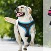 RBX Mesh Dog Harnesses