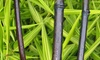 Groupon Goods Global GmbH: One, Two or Four Hayloft Phyllostachys Plants