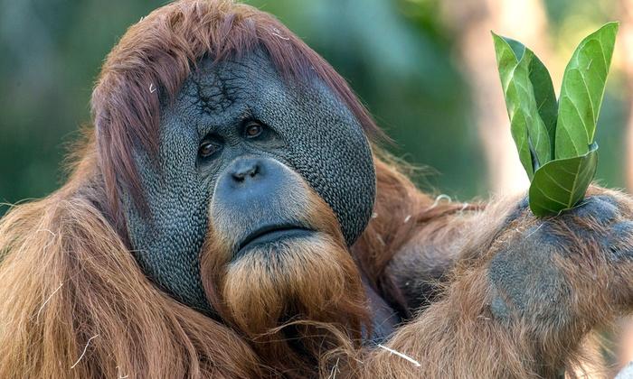 San Diego Zoo 2019 Tickets - San Diego, CA   Groupon