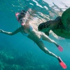 Up to 71% Off Dolphin or Turtle Snorkeling