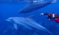 イルカと泳ぐ夢を叶えよう≪3日間・ドルフィンスノーケラー ライセンス取得コース≫男女OK @Blue Ocean 池袋店