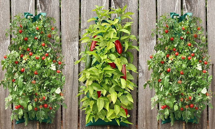 60 Off on Organic Vegetable Garden Groupon Goods