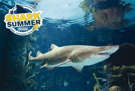 Single-Day Admission with Souvenir Cup for One Adult or Child to Newport Aquarium (Up to 27% Off)