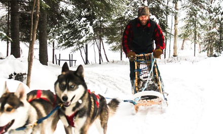 One Hour of Kick-Sledding with Dogs for One or Two with Aventure Quatre Saisons (Up to 55% Off)