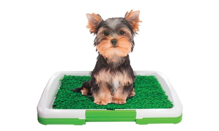 Potty Train A Dog Indoors