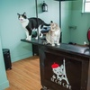Up to 40% Off at Le Cat Cafe